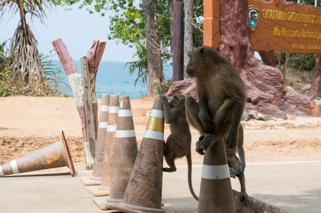 Affen am Eingang des Koh Lanta Nationalparks