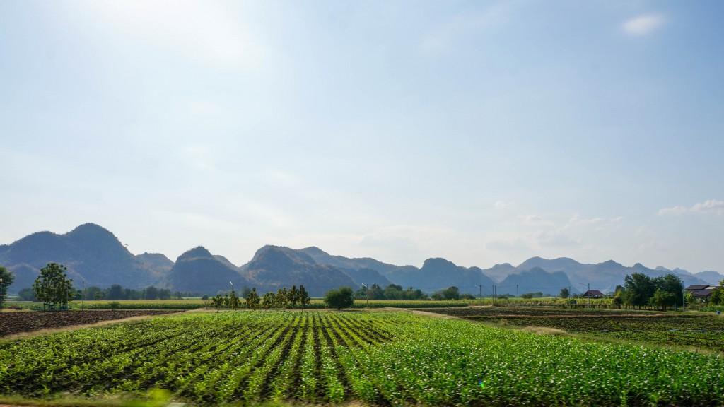 Blick auf eine Maniok-Plantage vor einer Bergkette