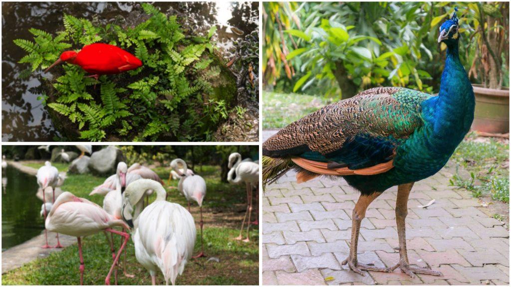 Im KL Bird Park leben mehr als 200 verschiedene Vogelarten.